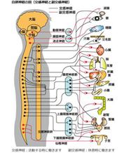 背骨~骨盤のバランスを整える